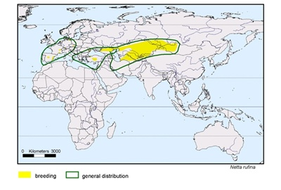harta-distributie-rata-pochard-cu-creasta-rosie-Delta-Dunarii