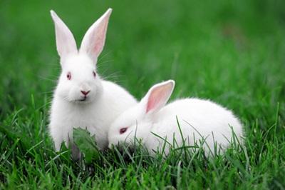 iepuri-pe-iarba-infectii