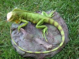 iguana-verde-pe-piatra-dinosaur-in-miniatura