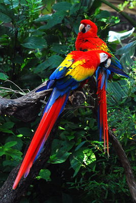 papagali-ara-stacojii-curcubeu