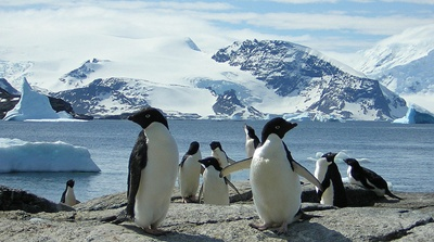 pinguini-pasari