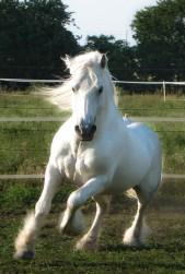 ponei-alb-fell-rapid
